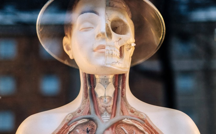 Human Body UX